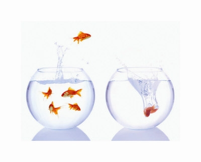 http://www.awardco.com/wp-content/uploads/2012/08/Job-Hopping.jpg